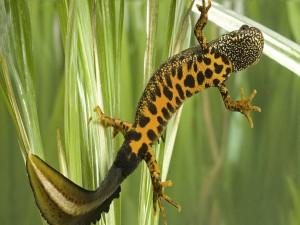 Salamandra en un terrario