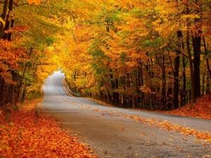 Árboles otoñales y hojas junto a una carretera