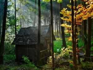 Pequeña cabaña en el interior de un bosque