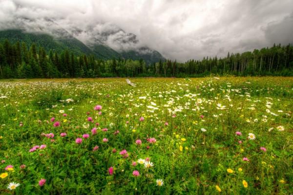 Un hermoso campo con flores silvestres