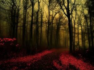 Camino en un bosque tenebroso
