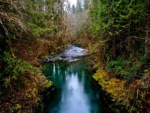 Estrecho río en el interior de un bosque