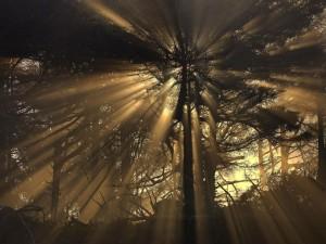 Rayos de sol filtrándose entre las espesas ramas de los árboles