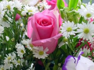 Un ramo con bellas flores