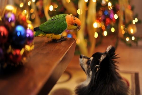 Un perro observando a un loro