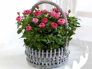 Canasta con bellas rosas