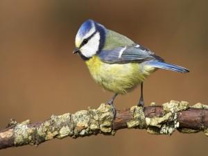 Un bonito pájaro sobre una rama