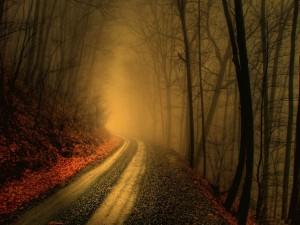 Camino en un bosque con niebla