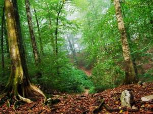 Hojas secas en un bosque verde