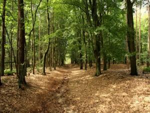 Paseando por el interior de un bosque