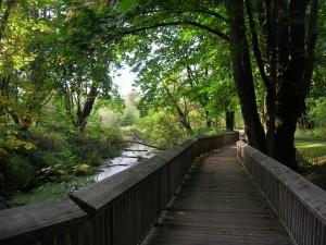 Pasarela de madera junto al río del bosque