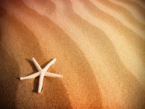 Estrella de mar sobre la arena
