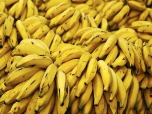 Bananas recién cortadas