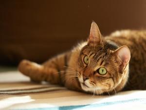 Un gato tumbado sobre una alfombra de rayas
