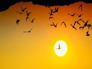 Murciélagos volando al atardecer