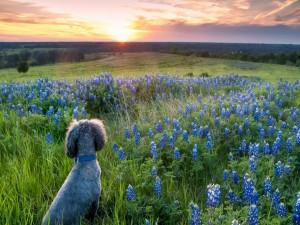 Un perro entre flores contemplando el amanecer