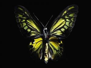 Cuerpo y alas de una mariposa