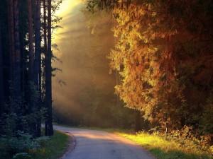 Rayos de sol iluminando una pequeña carretera