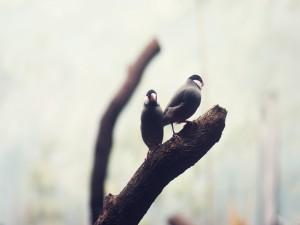 Dos pájaros sobre una rama