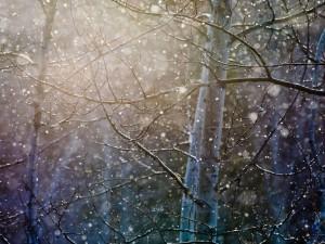 Suaves copos de nieve cayendo entre las ramas de los árboles