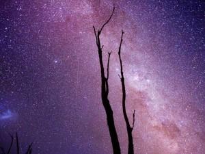 Vía Láctea sobre un árbol seco
