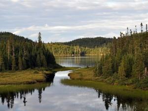 Lago rodeado por centenares de pinos