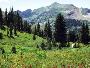 Pinos y flores en una pradera junto a una montaña