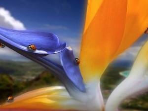 Mariquitas en los pétalos de una flor