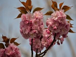 Ramas con flores rosas primaverales