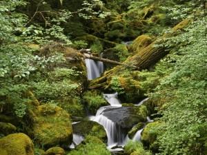Cascada entre grandes rocas y un tronco de un árbol caído