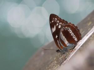 Mariposa sobre una roca