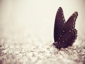Mariposa caminando sobre una roca