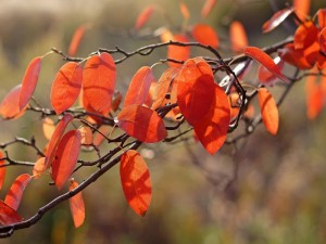 Hojas naranjas en las ramas de un árbol