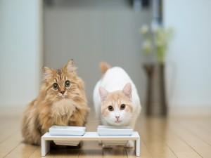 Dos gatos bebiendo leche