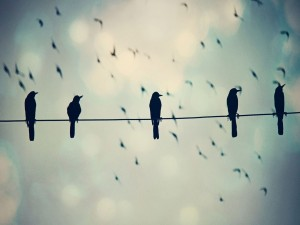 Pájaros sobre un cable