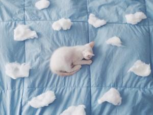 Un gatito duerme rodeado de nubes de algodón