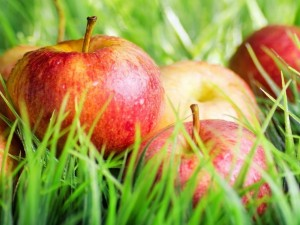 Manzanas entre la hierba verde