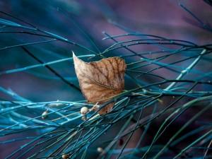 Hoja seca sobre unas ramas verdes