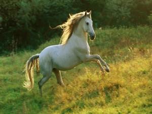 Hermoso caballo blanco sobre la hierba
