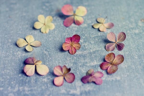 Florecillas formando un círculo