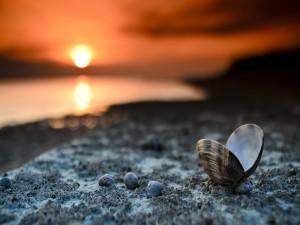 La concha de una almeja fuera del mar