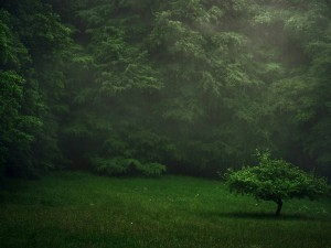 Lluvia sobre los frondosos árboles