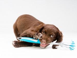 Bello perrito jugando con un cepillo