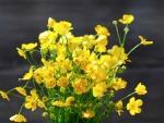 Ramillete de radiantes flores amarillas