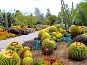 Cactus en un jardín botánico