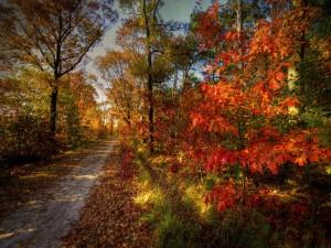 Bonito día de otoño en un bosque