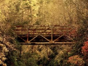 Puente oxidado entre los árboles