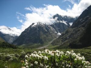 Hermoso paisaje del Parque Nacional de Fiordland (Nueva Zelanda)