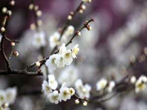 Florecillas blancas en las ramas de un árbol frutal