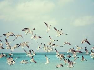 Grupo de aves marinas volando sobre el mar